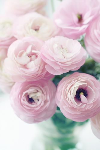 Pink Ranunculus This Board Features Flowers That Are Usually Available For Florists To Buy In The Uk In February Fo Avec Images Fleurs Qui Sentent Bon Fleur Amour Fleurs
