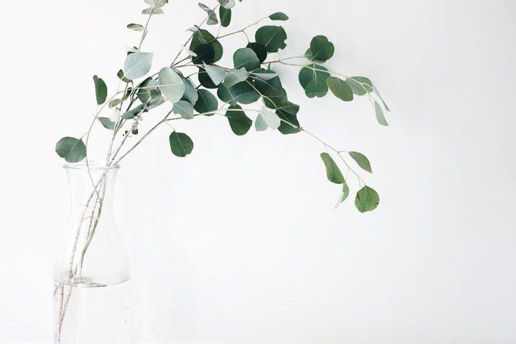 Green Leaf Plant Photo Free Plant Image On Unsplash Plants Eco Friendly House Minimalist Living