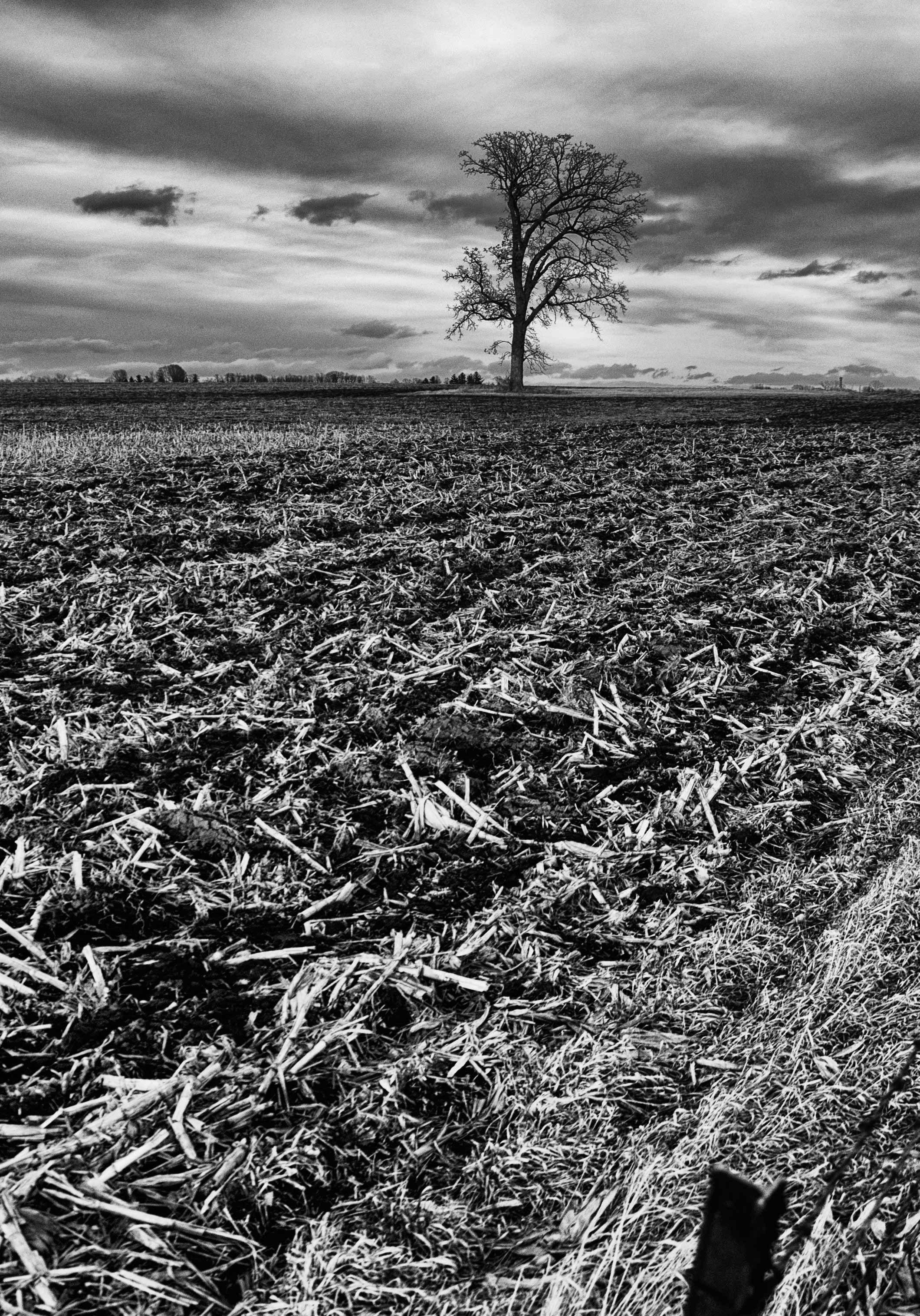 3 Trees In 3 Fields 1 Bin Landscape Photography Tree Landscape
