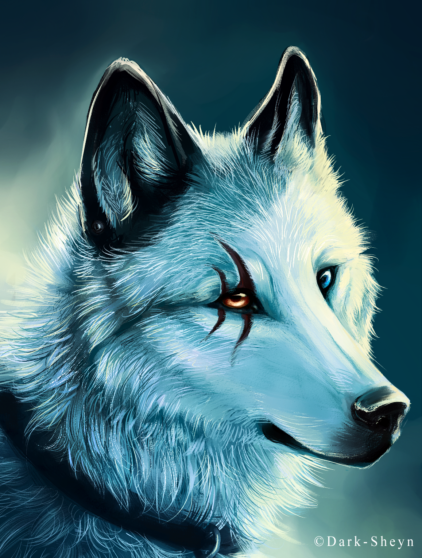 крутые фото волка на аву