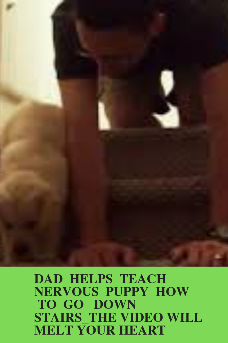 [VIDEO]Dad helps Teach Nervous Puppy How To Go Down Stairs_The Video Will Melt Your Heart