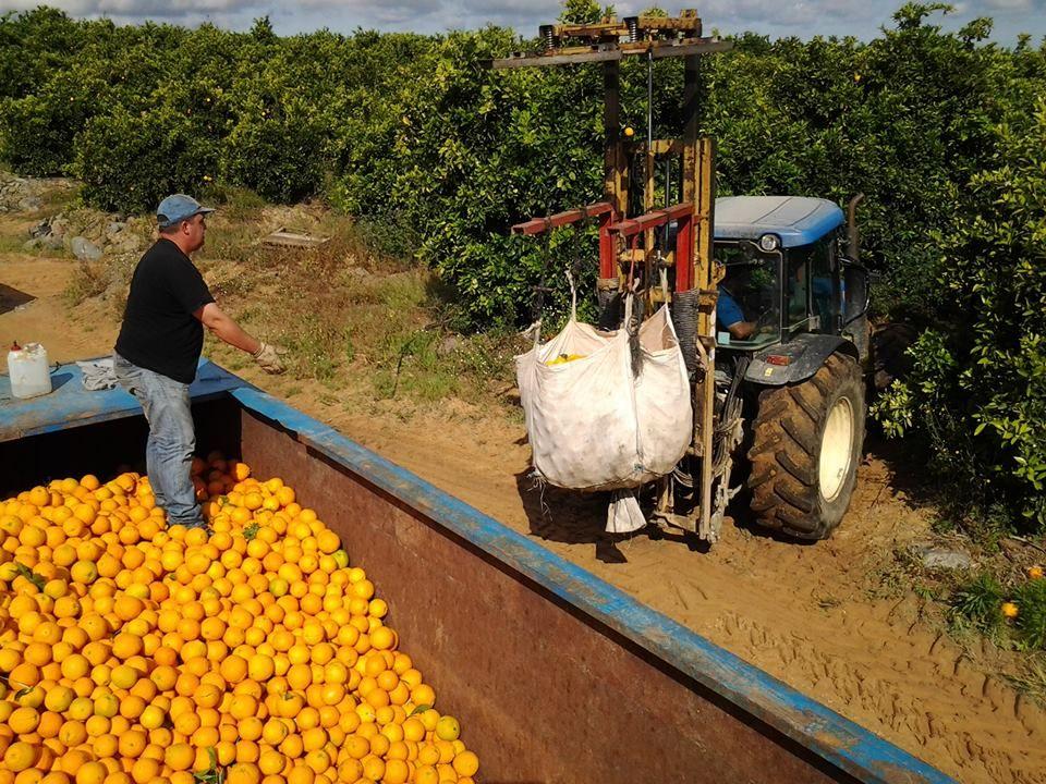 Resultado de imagen para procesadoras y plantios de naranja