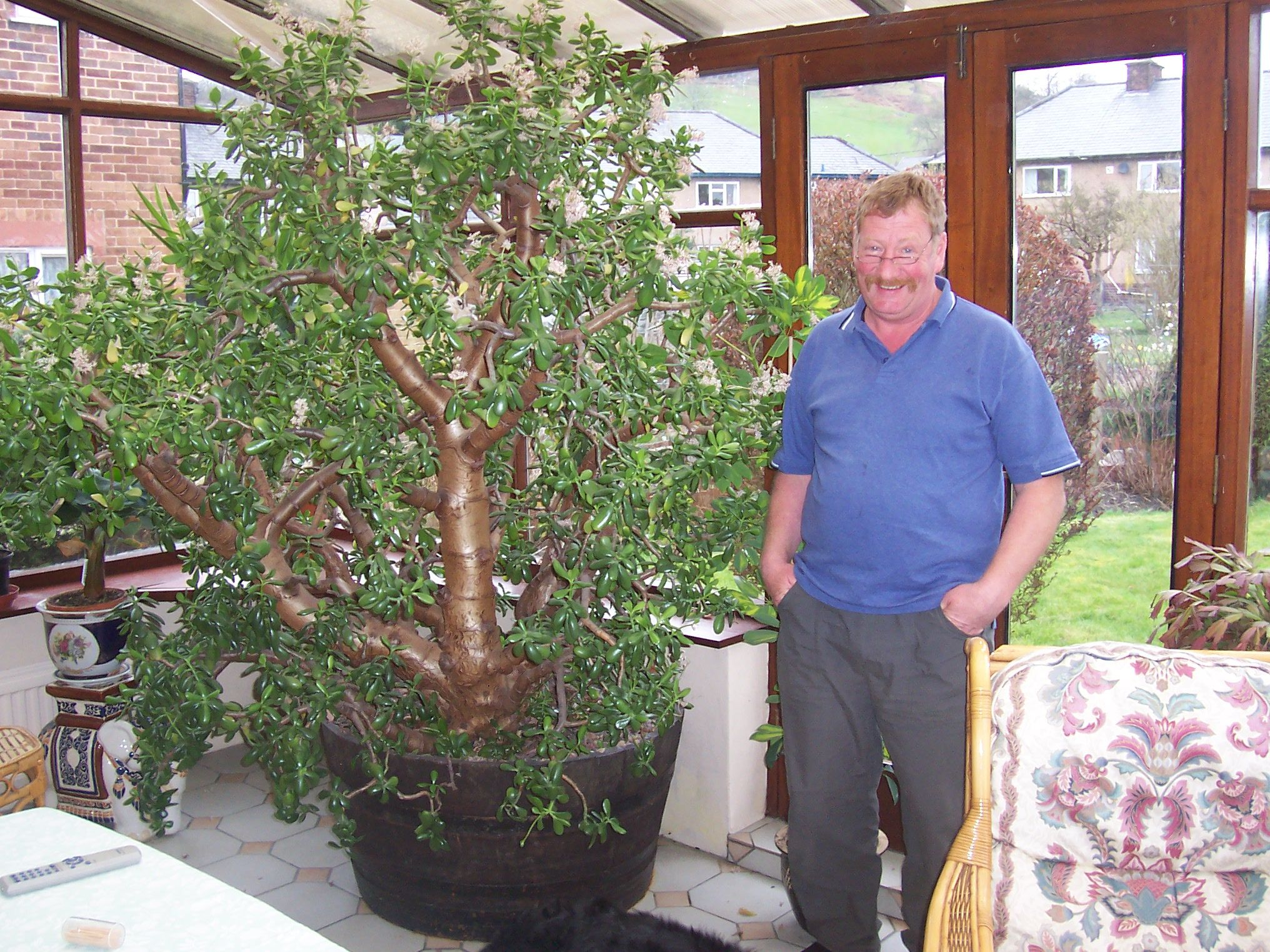 Giant Jade Money Plant Hope Mine Looks Like This In 27 Years
