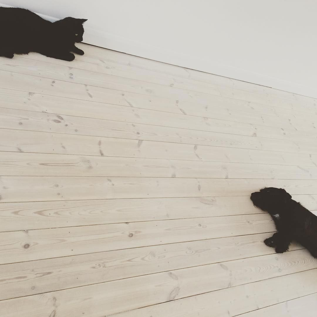 Just chill… Pine floor treated with #WOCA Wood Lye White and finished with Colour Oil Extra White #repost @helenestokes #wocaoil #mondayvibes #mondaymotivation #countdowntochristmas  #wocadenmark #petfriendly #whitefloors #pinefloors #mondaymood