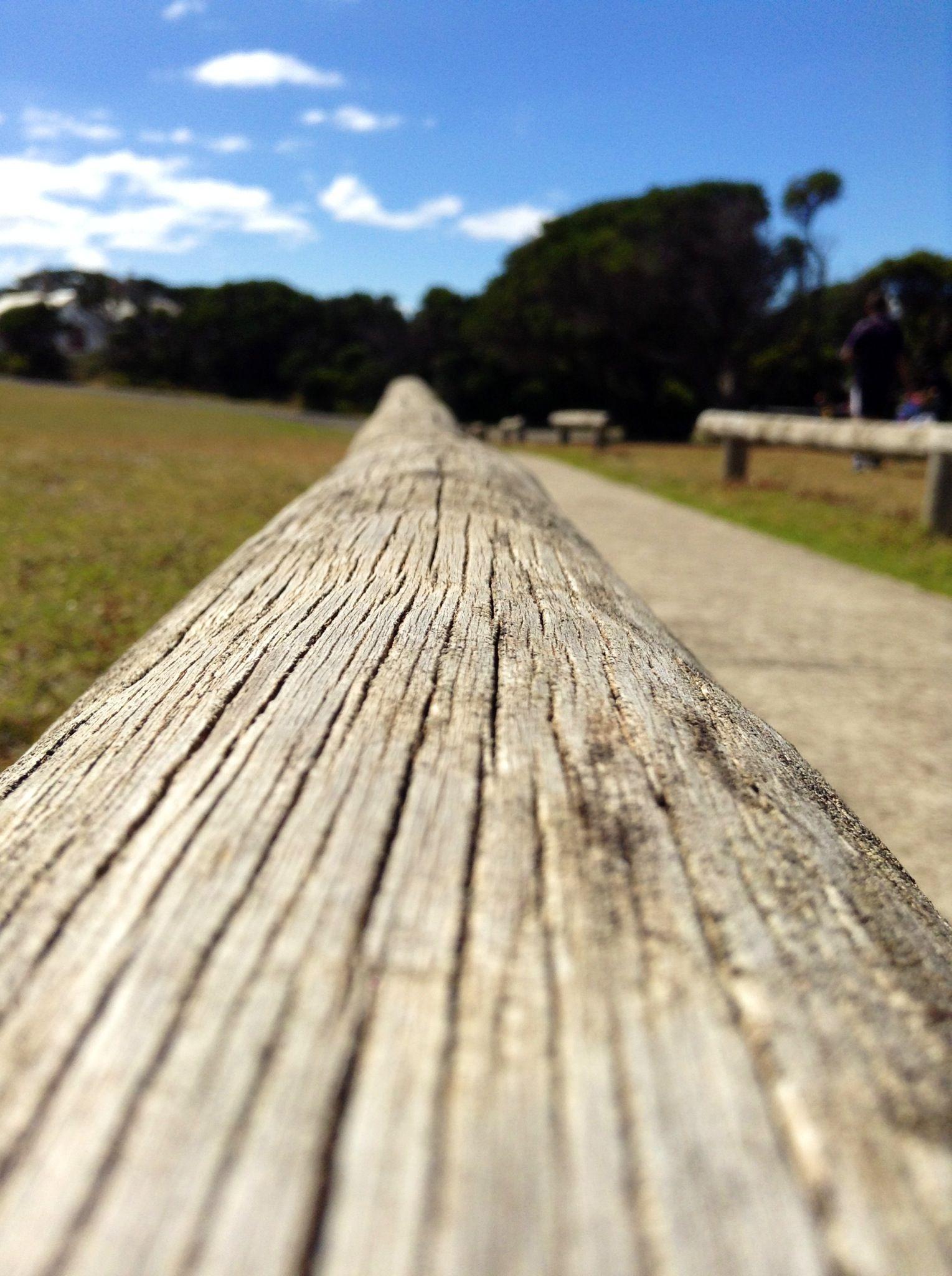 A beautiful sitting log.