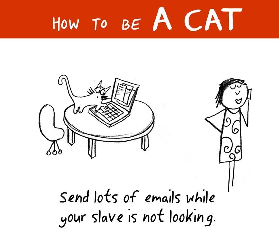 #how to be a cat