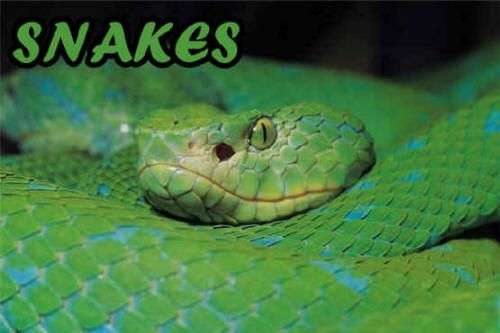 Snake Facts, Photos, And Activities  Snake Facts, Fun -7002