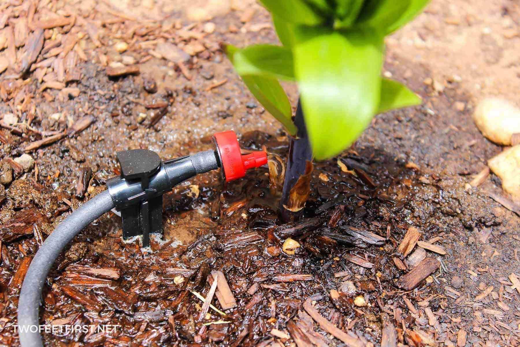 DIY Drip Irrigation System Drip irrigation, Drip