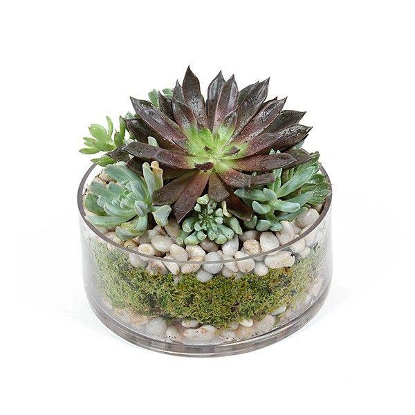 Succulent Dish Cacti Succulents Pinterest Succulents Plants