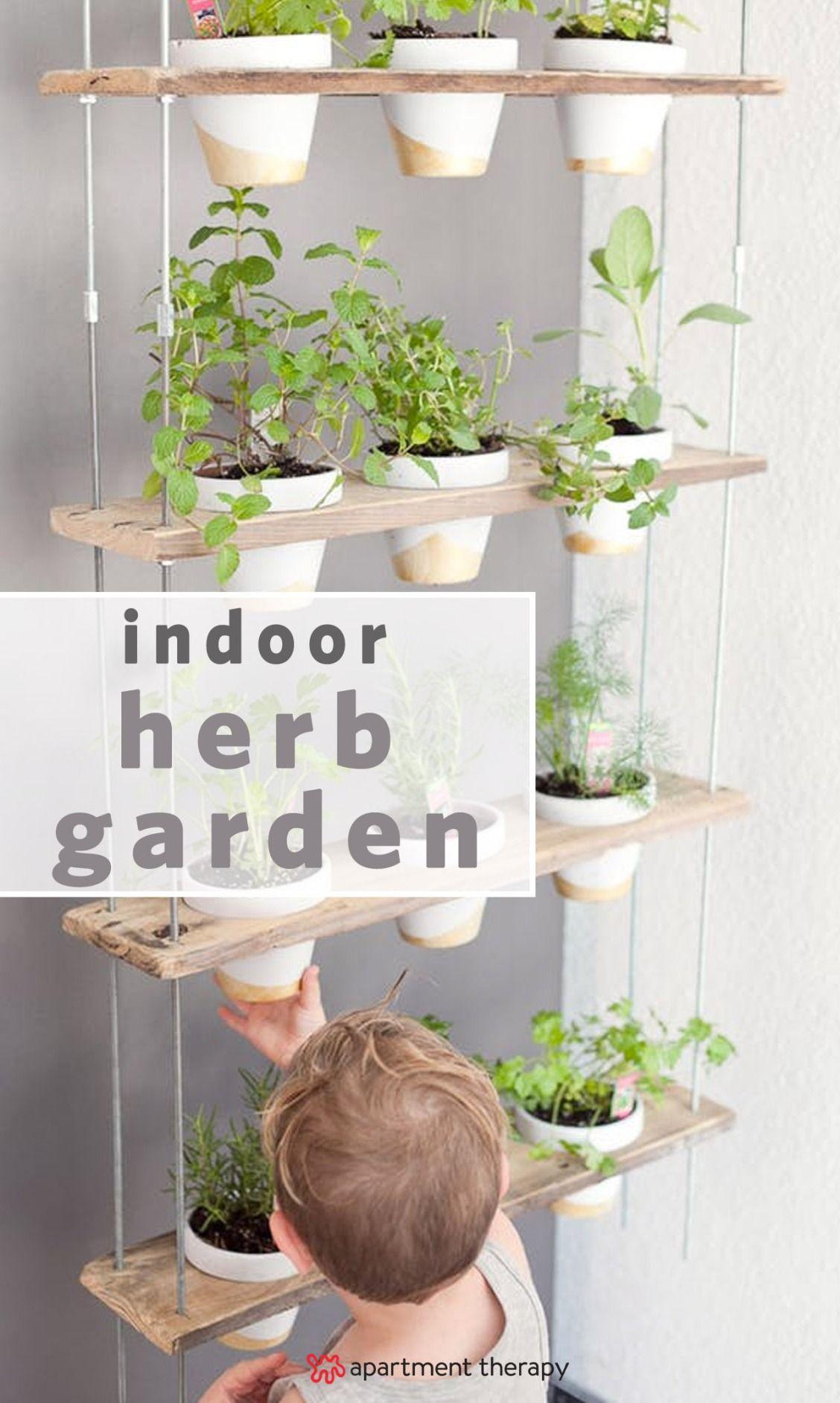 How To Grow Herbs Indoors Herb Garden In Kitchen Herbs Indoors
