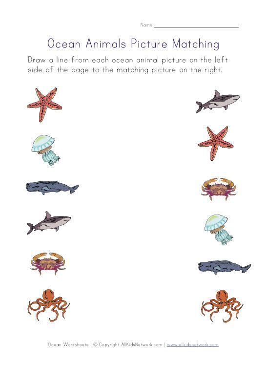 Match the ocean animal printable worksheet | Ocean Worksheets ...