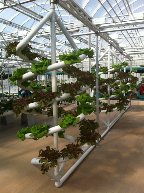 Vertical growing system epcot vertical farm food for Vertical planting system