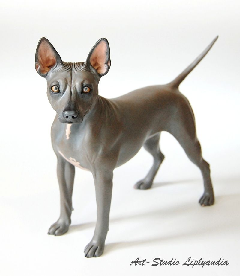 Portrait American Hairless Terrier Dog Polymer Clay Sculpture