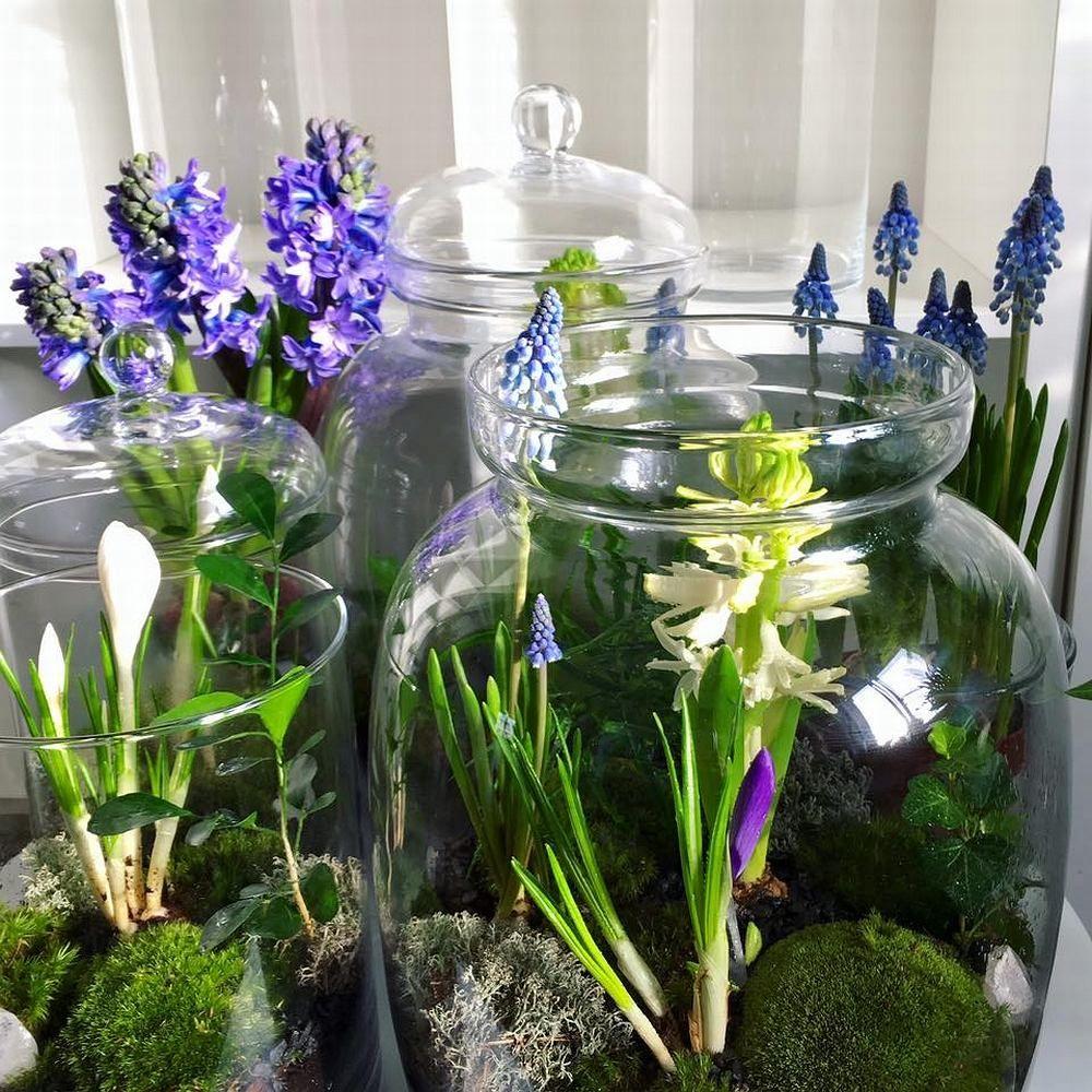 Wiosna W Sloiku Horticulture Flowers Plants
