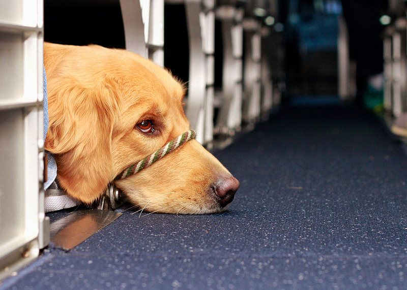 The Problem With No Kill Shelters Service Dogs Dogs On Planes