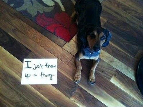 Dog Shaming (20 pics) | High Octane Humor