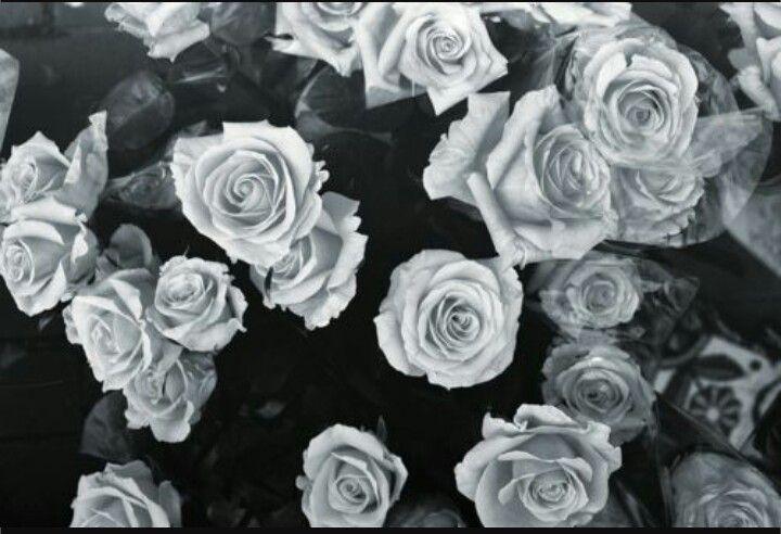 Epingle Par Sarah Bunny Sur Backgrounds Wallpaper Fond Decran Fleur Image Fond Noir Photographie De Fleur