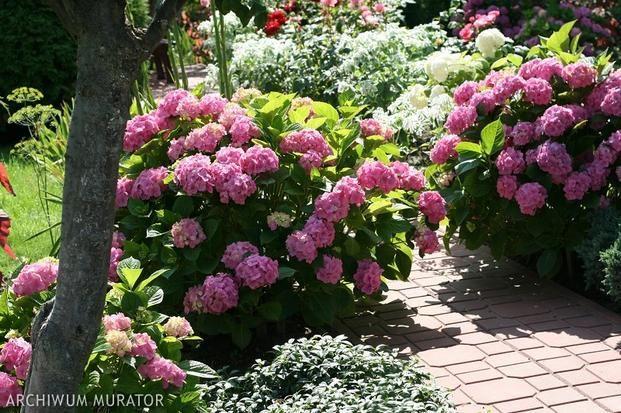 Rosliny Do Cienia Plants Garden