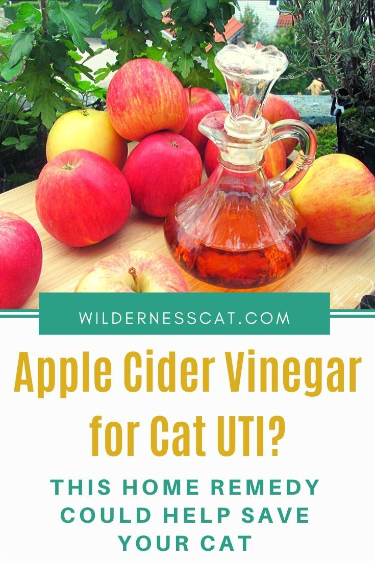 Apple cider vinegar for cats cat uti home remedy apple