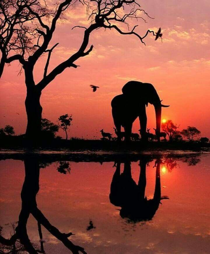 Pin By Yvonne On Africa