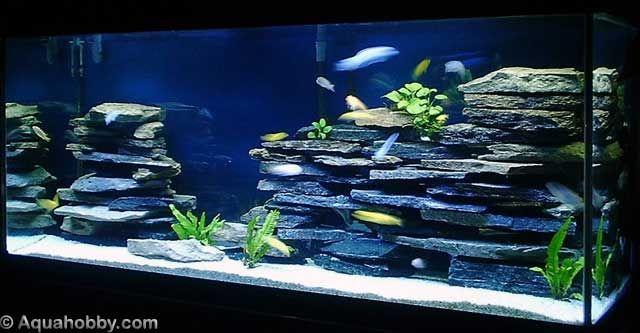 Cichlid Tank Landscape Using Aquarium Safe Silicon And Flat Slate Rocks Cichlid Aquarium Aquascape Aquarium Amazing Aquariums