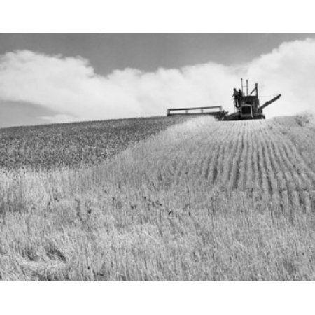 Posterazzi Combine harvester harvesting wheat crop Walla Walla