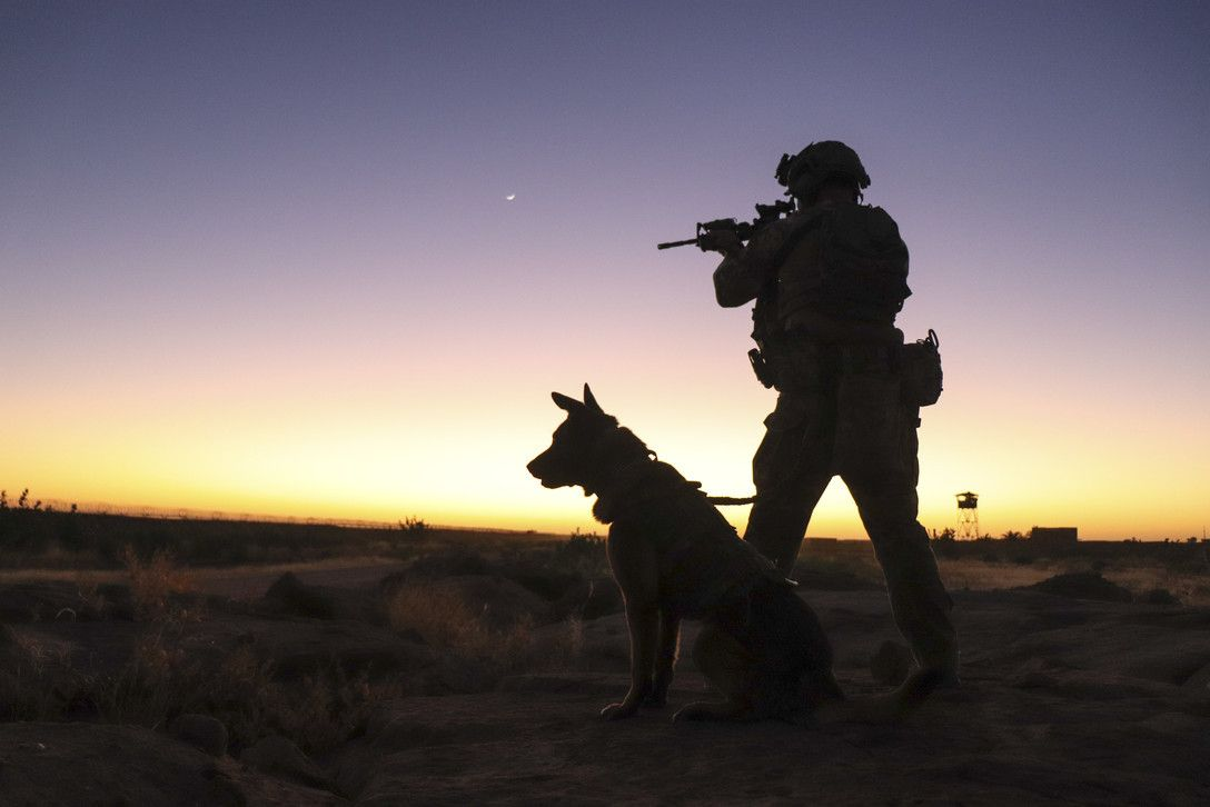 Military Working Dogs on Nigerien Air Base