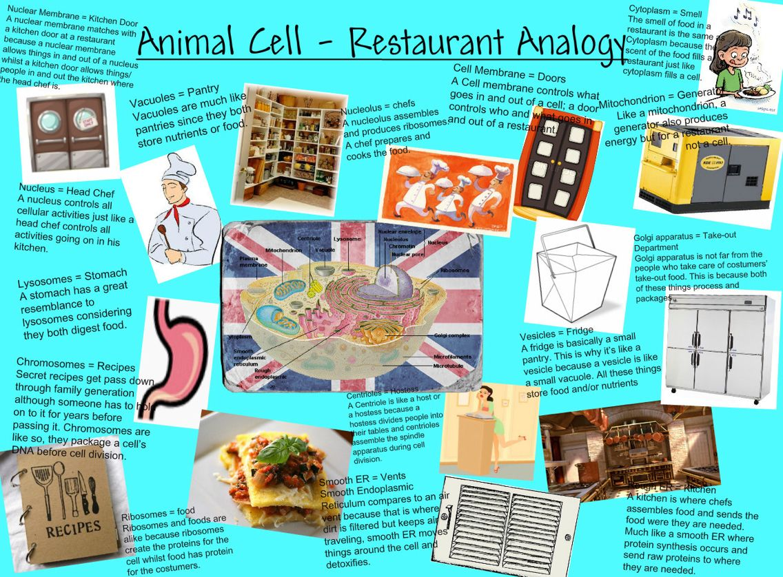 If Anyone Needed It Well Here You Go Cell Analogy Plant And Animal Cells Cells Project