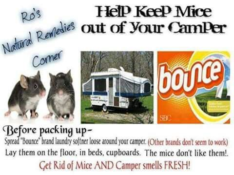 Mice hate Bounce