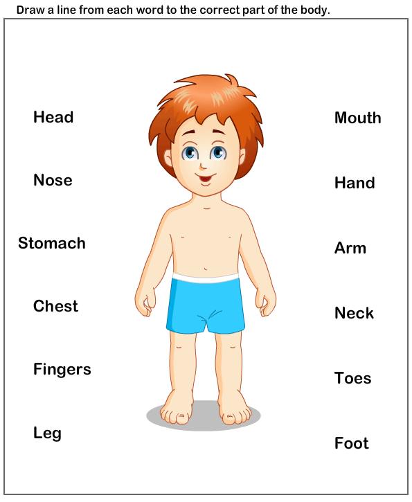 Body Parts Diagram For Kindergarten : parts, diagram, kindergarten, Parts, Theme