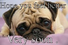 Get Well Soon Puppy Google Search Cute Pugs Pugs