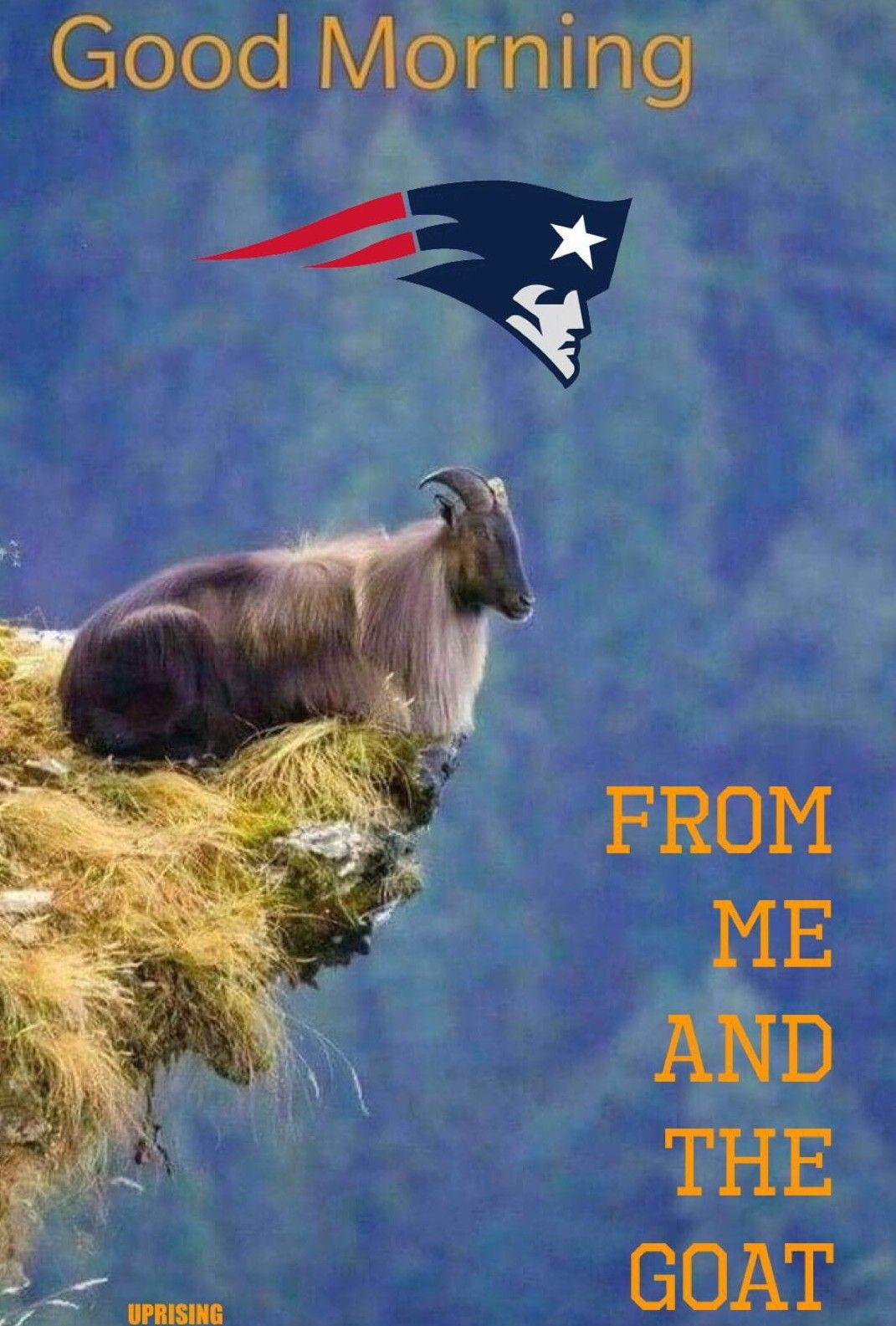Pin By Paula Lopes On Patriots Patriots Memes New England Patriots Patriots Football