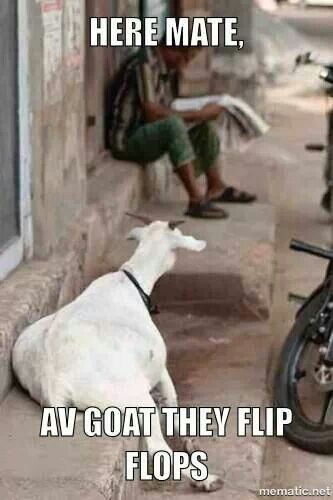 Ive goat they flip flops