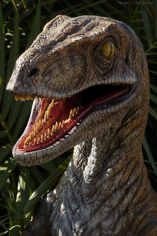 o veloz velociraptor tambm conhecido como raptor voc pode acessar jogos online grtis
