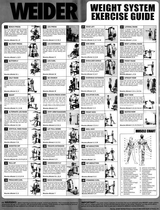 Gold's Gym Xrs 50 Exercise Chart Pdf : gold's, exercise, chart, Weider, Exercise, Chart, Workouts, Machines,, Workout, Chart,, Exercises