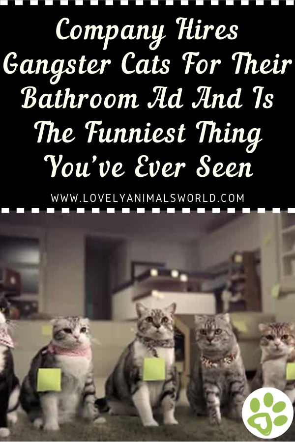Company Hires Gangster Cats For Their Bathroom Ad And Is