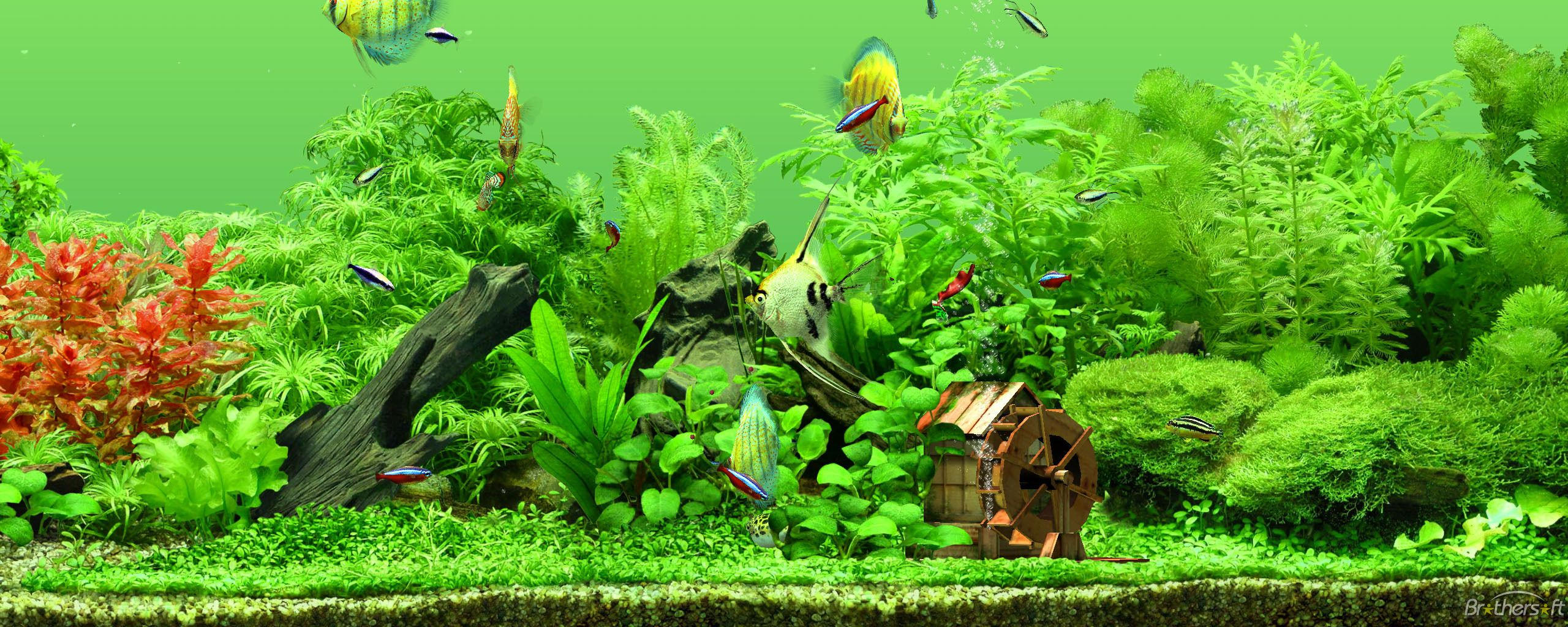 freshwater aquarium design examples 6 - Freshwater Aquarium Design Ideas