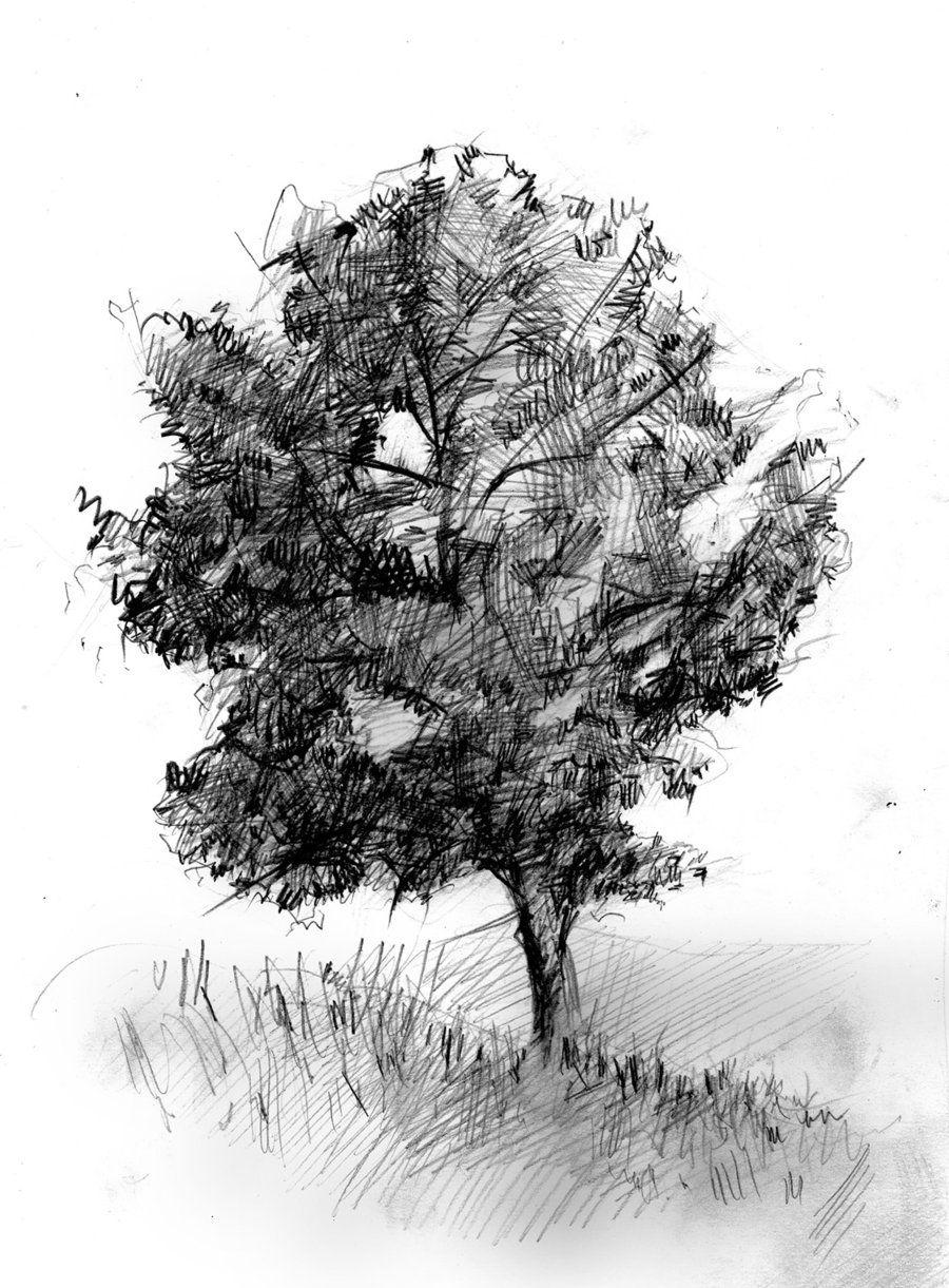 Inspiration dessiner un arbre dessin au crayon et fusain - Croquis arbre ...