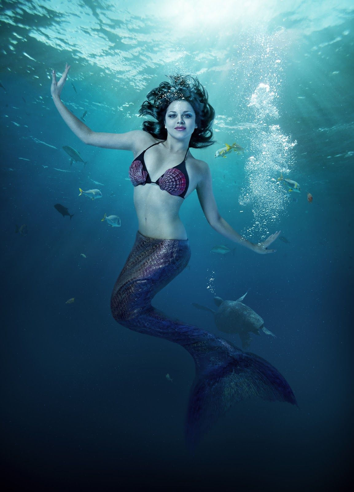Mermaids Live Show At The Ripley S Aquarium In Myrtle Beach Attractions