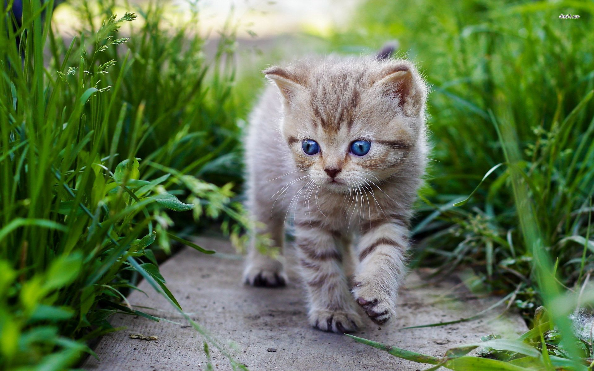 Cute Baby Cats wallpaper Cats Pinterest