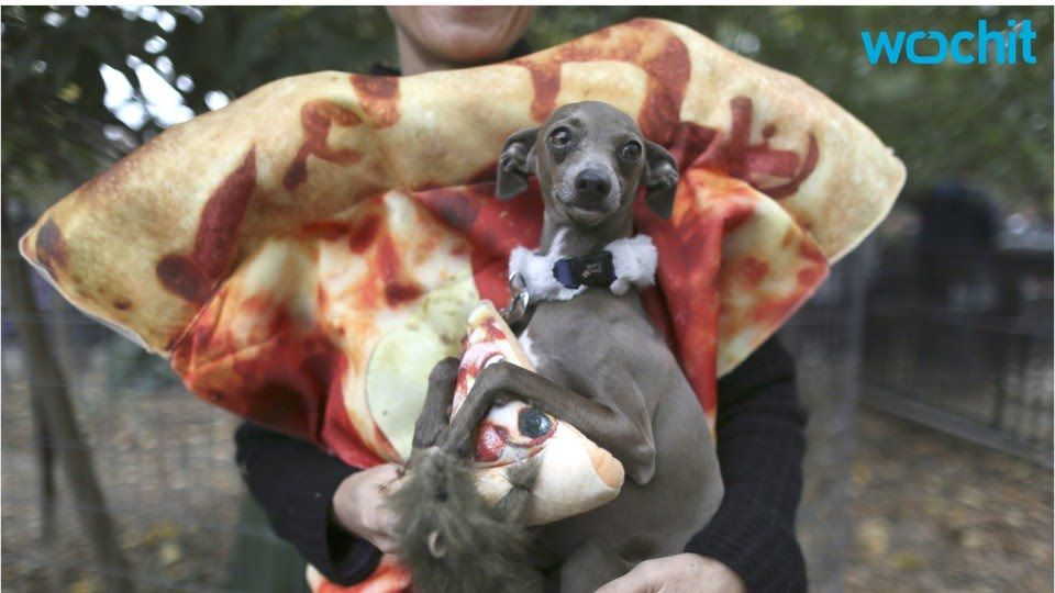 Chicago Gets Pizza Squirrel To Answer Pizza Rat Dog Parade Pet
