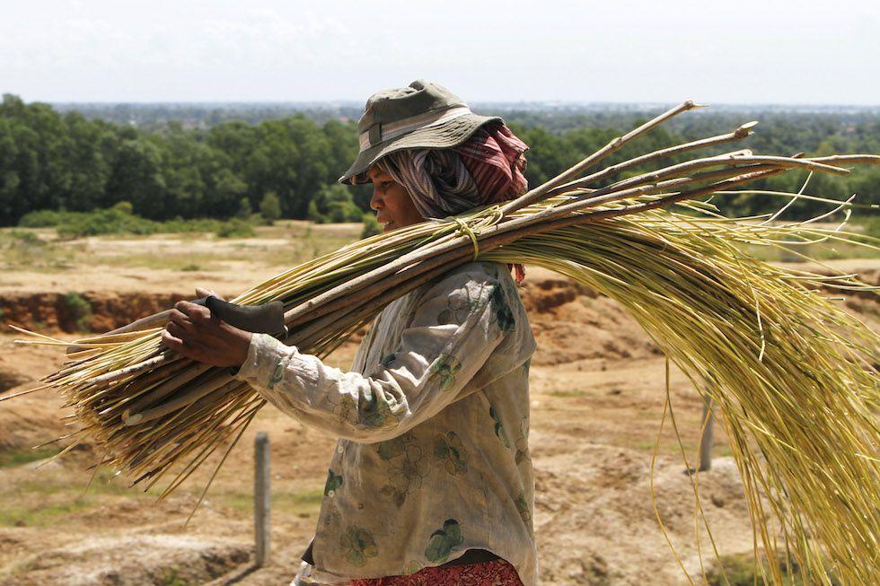 Giovedì 21 agosto -Phnom Baseth, Cambogia Una contadina ritorna a casa con un fascio di vimini appena raccolto, che utilizzerà per fare cesti e altri oggetti da vendere al mercato.