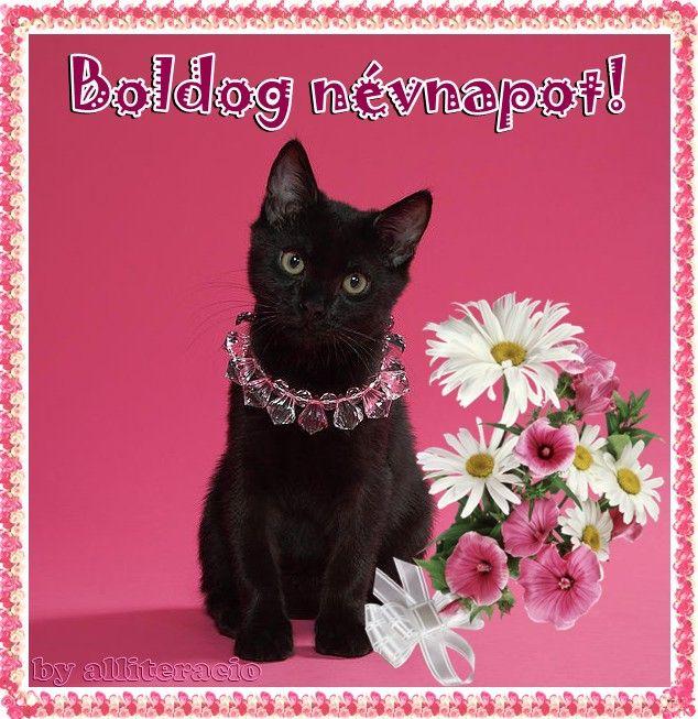 cicás névnapi köszöntő névnapi képek, képeslapok, cicás kép | üzenetek | Pinterest cicás névnapi köszöntő
