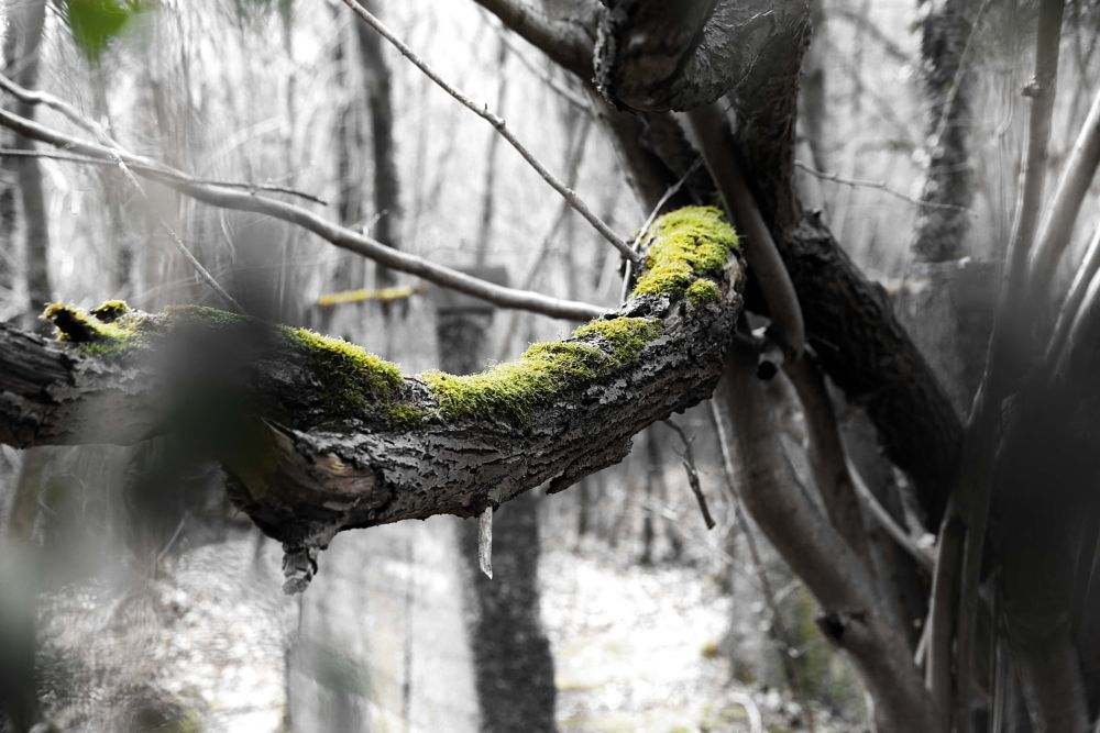 moss by Landesfahrer