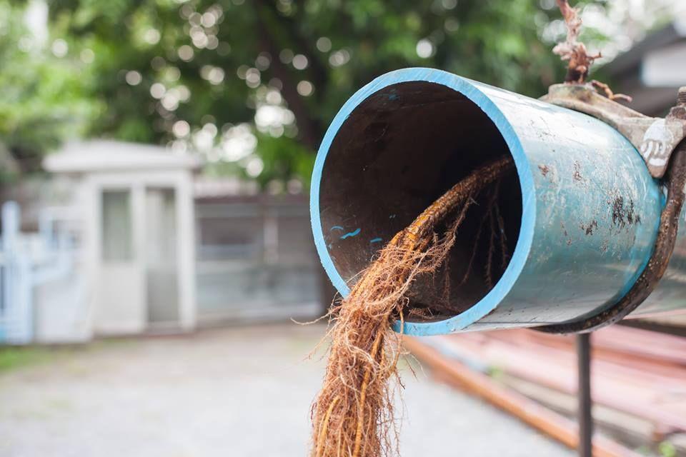 Drain cleaning Toronto Company Kill tree roots, Drain