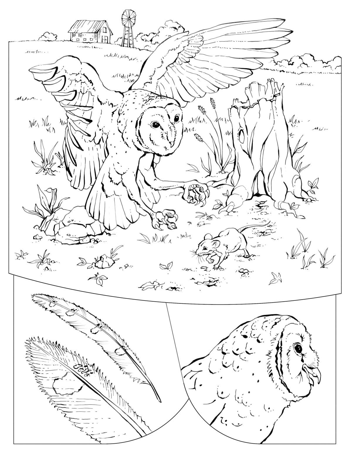Coloring Book Animals A To I Coloring Books Coloring Pages To Print Coloring Pages