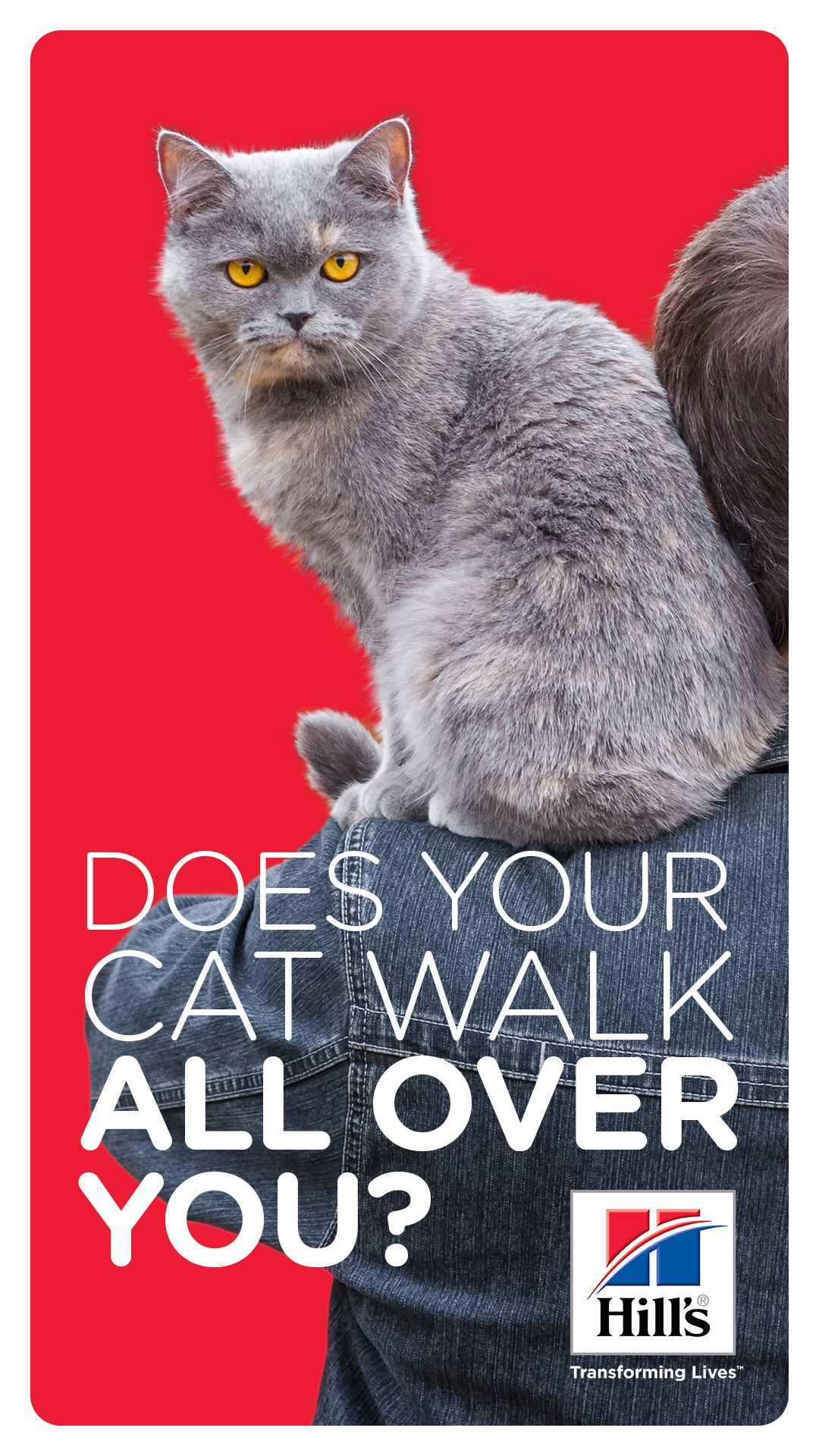 Why Does My Cat Walk On Me Hill S Pet In 2020 Cat Walk Cat Care Cats