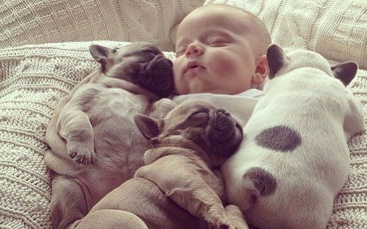 Very Cute Baby Puppies Bing Images Baby Puppies Bulldog