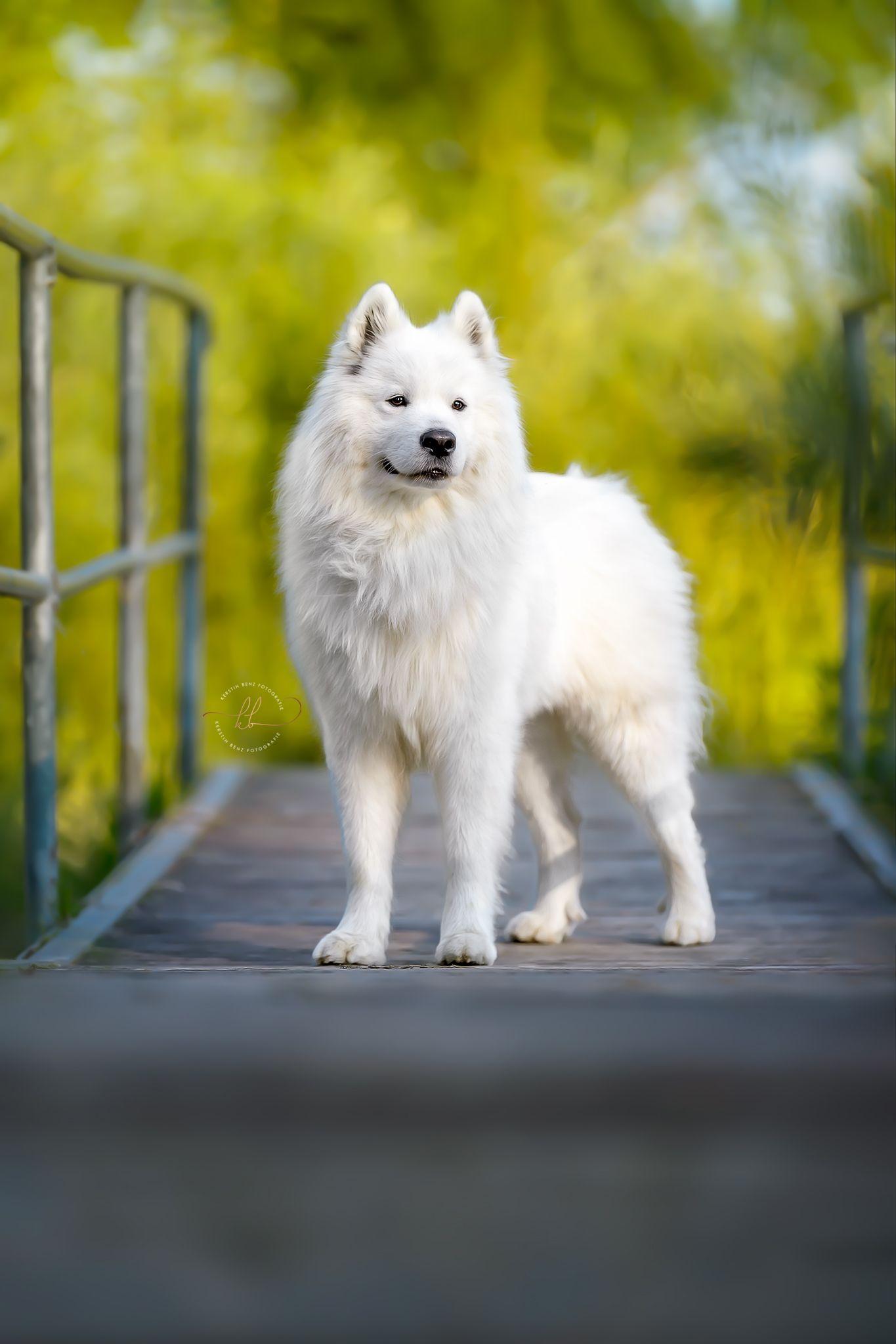 Pin Auf Hunde Ideen