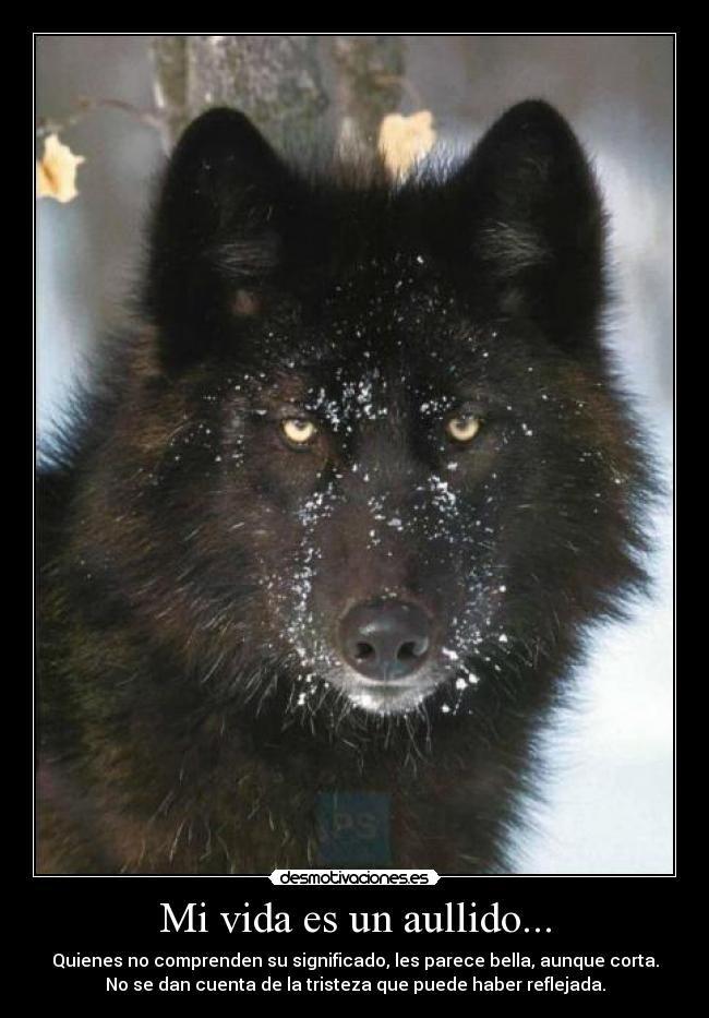 Resultado De Imagen Para Lobos Frases Yo Wolf Dogs Y Animals